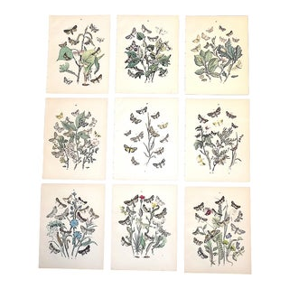 Authentic Antique 19th Century Butterflie Moths Chromolithographs - Set of 9 For Sale