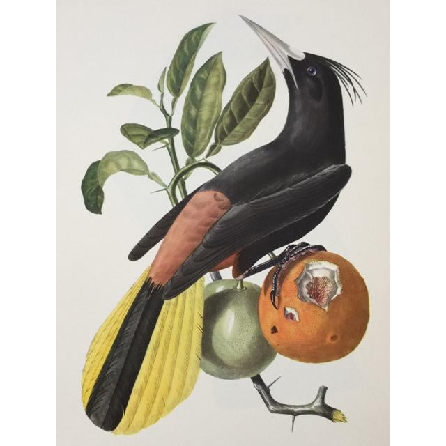 Figurative 1st Edition Full Color Lithographs of Tropical American Birds - Set of 30 For Sale - Image 3 of 13