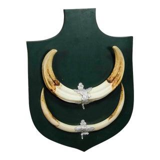 Great African Wart Hog Trophy Mount on Wooden Plaque For Sale