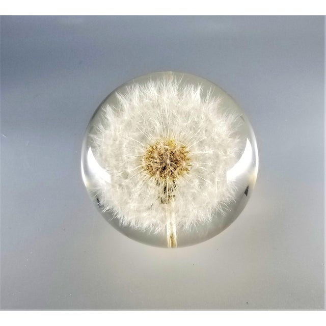 Plastic Vintage Lucite Sculpture Paperweight of a Dry Dandelion For Sale - Image 7 of 12