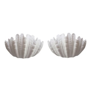 Regency Plaster Seashell Sconces - A Pair