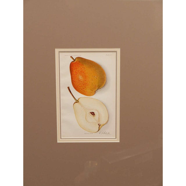 Figurative Architectural Digest Fruit Print For Sale - Image 3 of 8