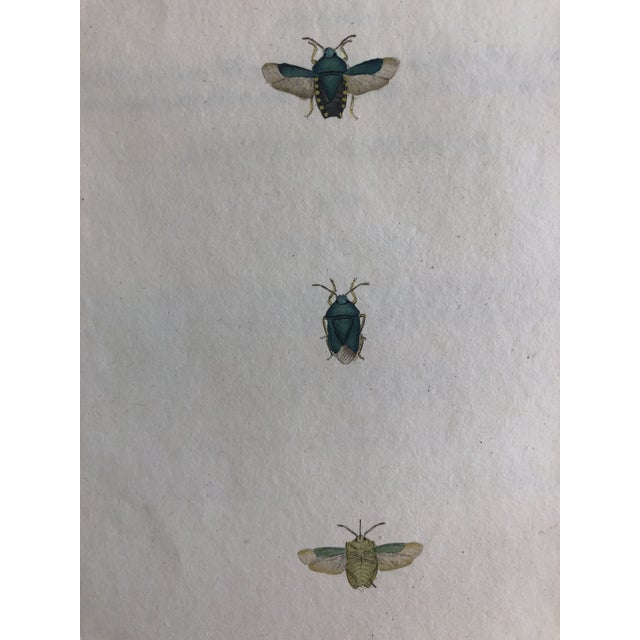 Mid 19th Century Entomology 19th Century Insect Print For Sale - Image 5 of 5