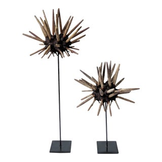 Large Natural Pencil Sea Urchins on Metal Stands - Set of 2 For Sale