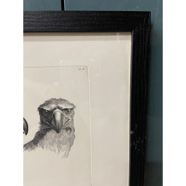 Man as Eagle - Physiognomic Heads Series Framed Illustration by Charles Le Brun For Sale In Los Angeles - Image 6 of 12