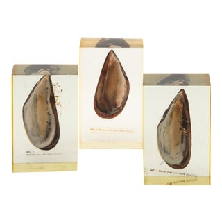 Pierre Giraudon Mussels Encased in Resin - Set of 3 For Sale