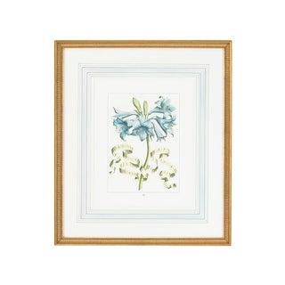 Botanical Floral With Ribbon 1 Framed Print For Sale