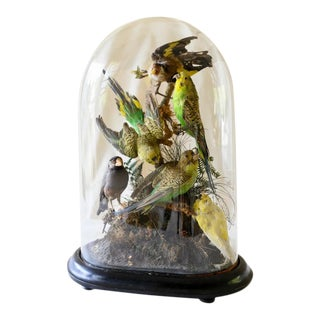 19th Century Taxidermists Bird Dome For Sale