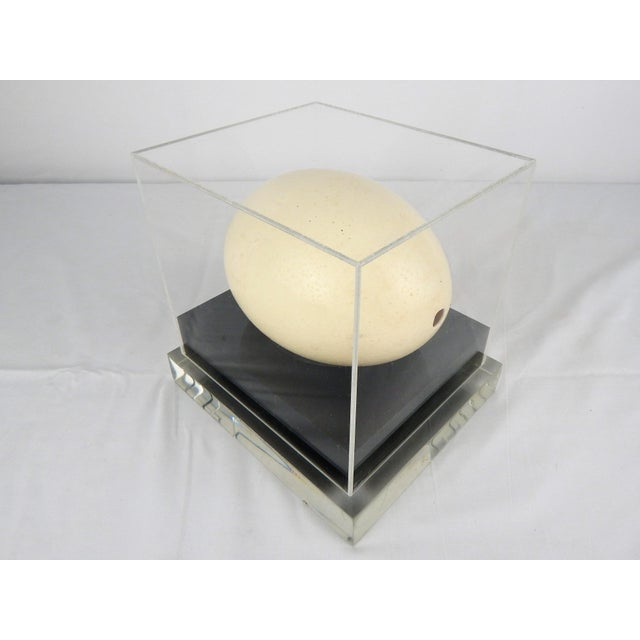 Lucite Display Case With Ostrich Egg For Sale - Image 4 of 8