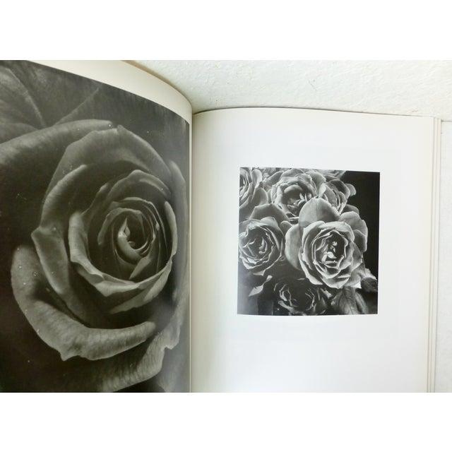 Hana, Yasuhiro Ishimoto Book For Sale - Image 10 of 11