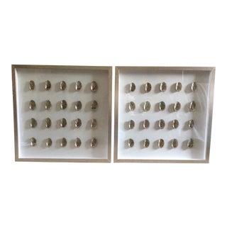 Framed Seashell Art - a Pair For Sale