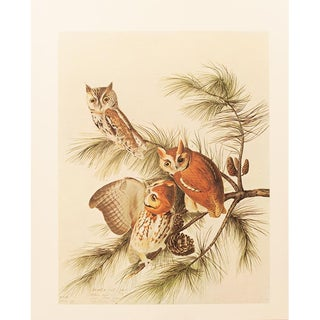 1960s Cottage Lithograph of Mottled Owl by Audubon For Sale