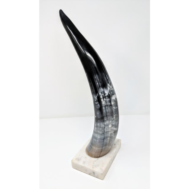 Horn on Marble Base For Sale - Image 9 of 12
