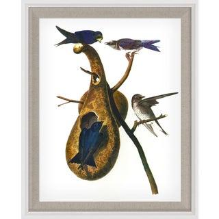 Audubon 1, Framed Artwork For Sale