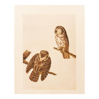 1960s Cottage Lithograph of Boreal Owl by Audubon For Sale