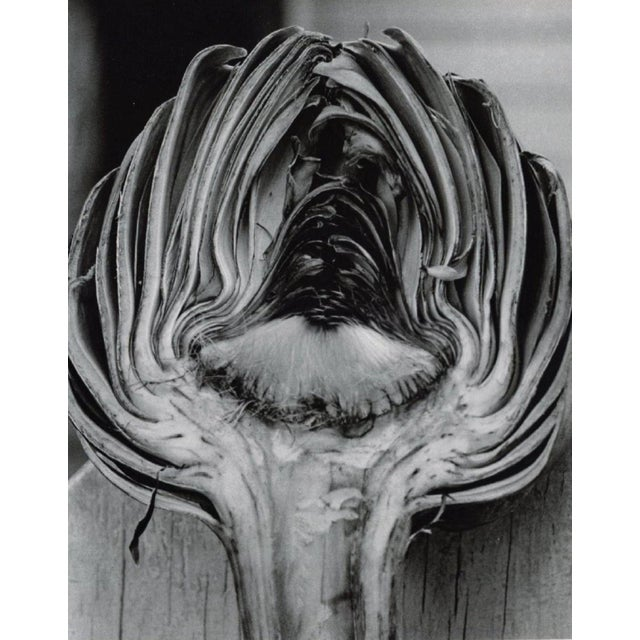 HORST Cynara Scolymus, 1945 (Artichoke) Sheet-fed Gravure Printing Date: 1992, Japan Image Size: 9.25 x 11.5 inches Horst...