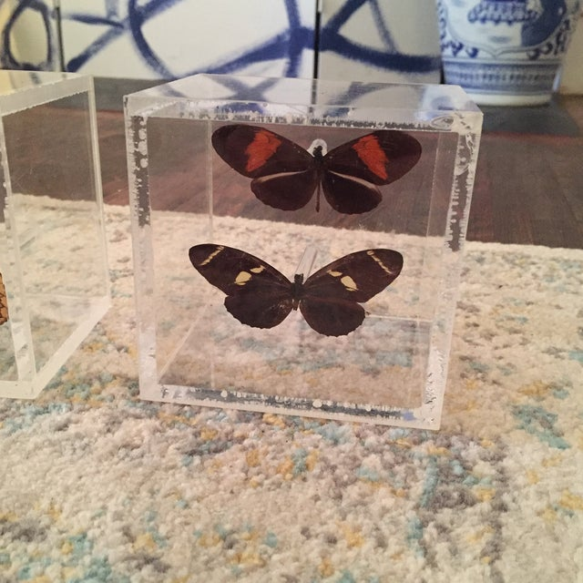 Lucite Cube Box Encased Butterfly Specimens Oddities Curiousities- a Pair - Image 3 of 11