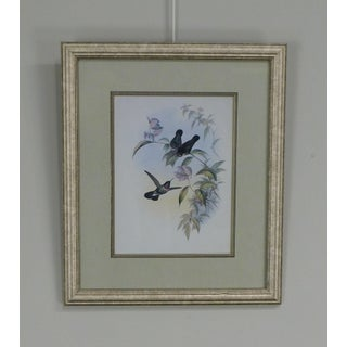 Quality Framed Print of 3 Hummingbirds Preview