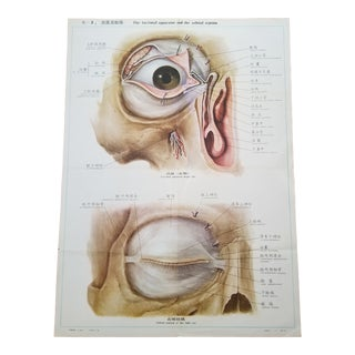 Scientific Anatomy Poster of an Eye For Sale