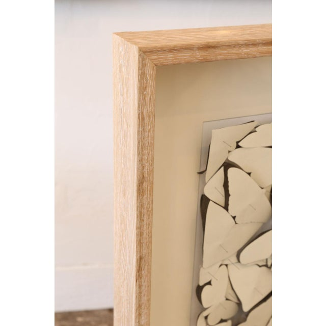 Traditional Butterfly Box Scarlet Ibis For Sale - Image 3 of 9