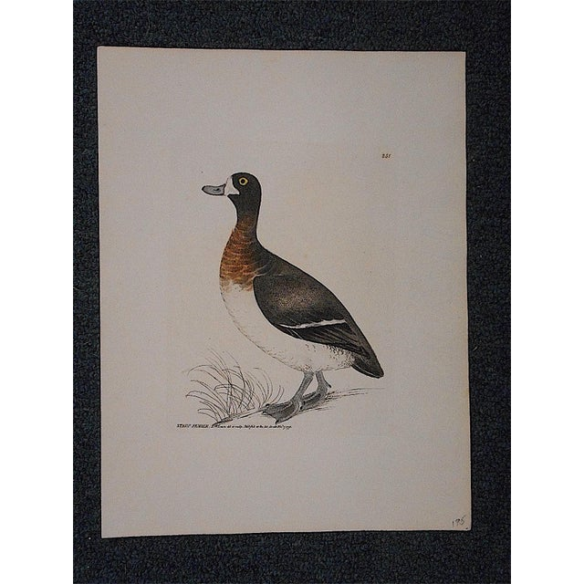 Antique 18th Century Bird Engraving - Image 2 of 3
