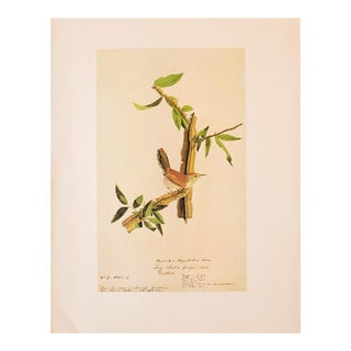 1960s Vintage Cottage Print of Bewick's Wren by Audubon For Sale