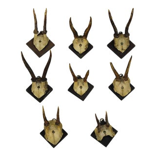 Eight Antique Black Forest Deer Trophies Ca. 1900 For Sale