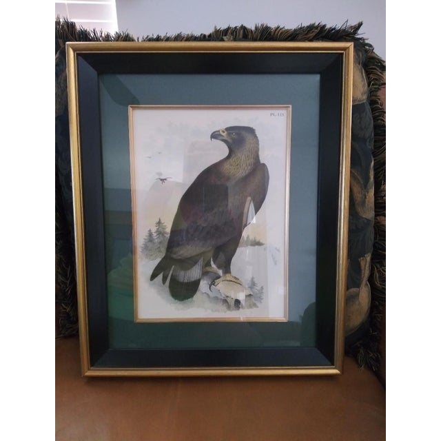 Hand Colored Eagle Etching Lithograph For Sale - Image 4 of 4
