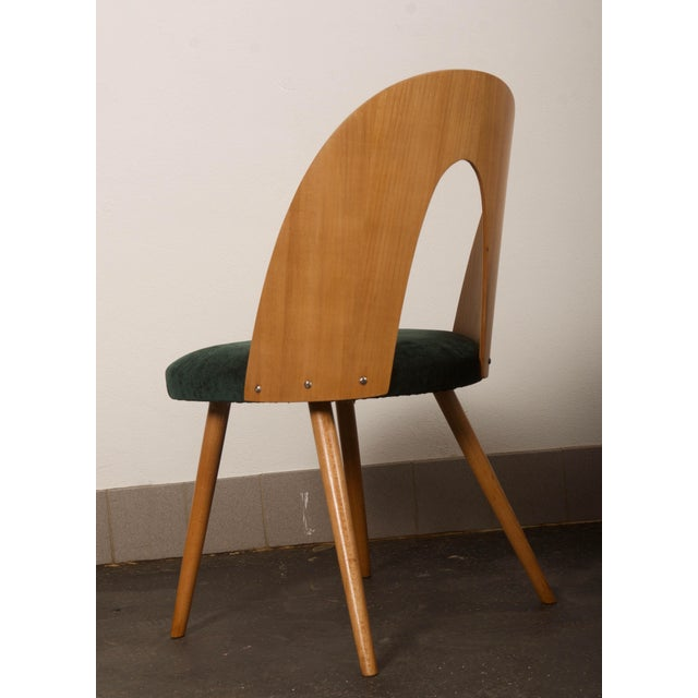 Wood Ash Dining Chairs by Antonin Suman for Tatra For Sale - Image 7 of 10
