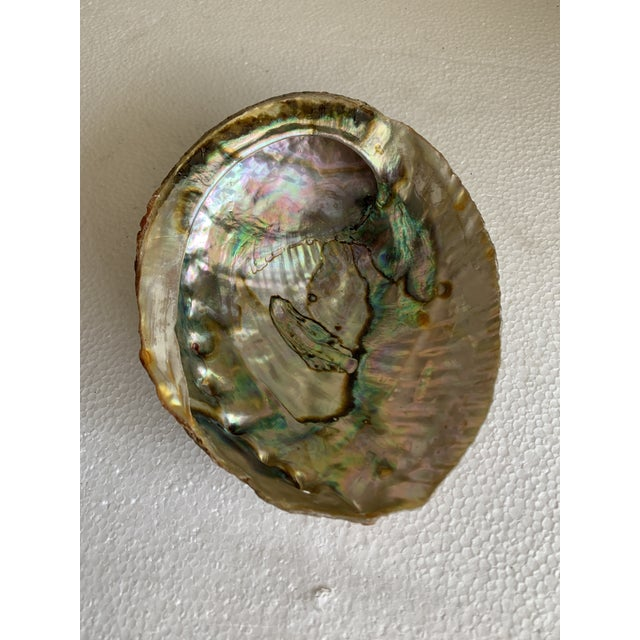 Luscious opalescent natural abalone shell. Gorgeous as a decor accent, bowl or tray for rings, soap or on its own....