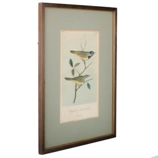 Antique Audubon Birds of America Print Preview