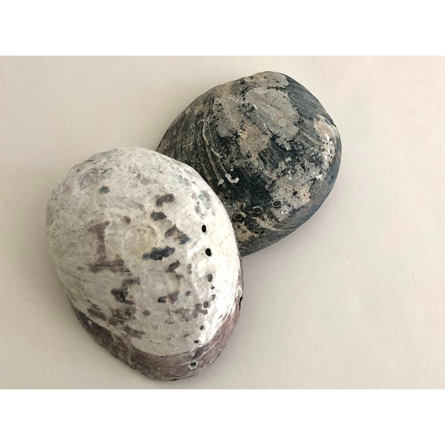 Black & White Abalone Shells - Set of 2 For Sale - Image 4 of 7