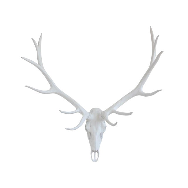 Resin Stag Skull Wall Decor, White For Sale