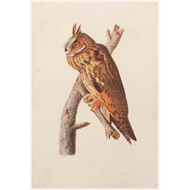 Chocolate Stunning Long-Eared Owl by John J. Audubon, Vintage Cottage Print For Sale - Image 8 of 10