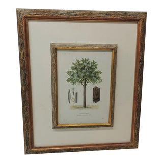 Late 20th Century Framed Botanical Print in a Wood Bark Style Frame With Gold Leaf Accents For Sale
