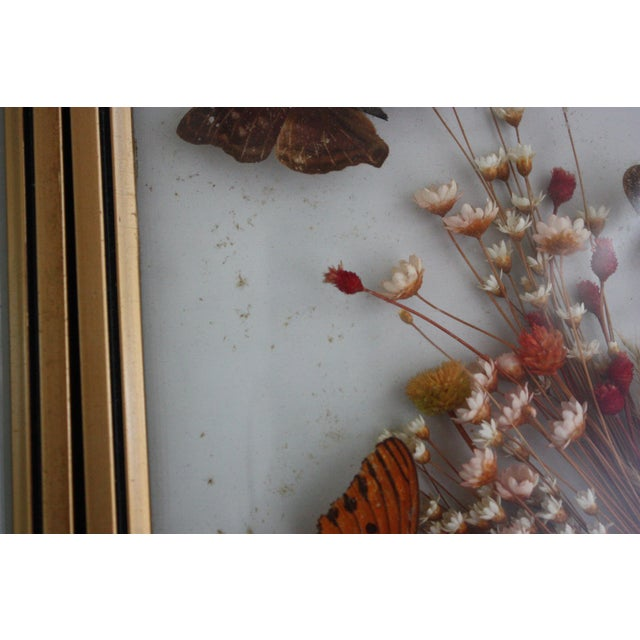 Framed Butterfly Specimens - A Pair - Image 4 of 4
