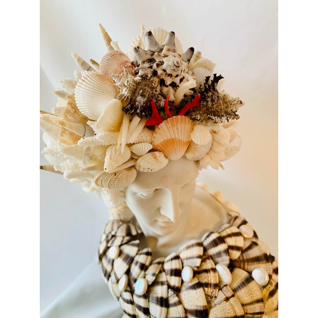Beautifully encrusted cast-marble Apollo bust. Tellins with Coin Pearls, Black Murex and unusual Scallops join the cast of...