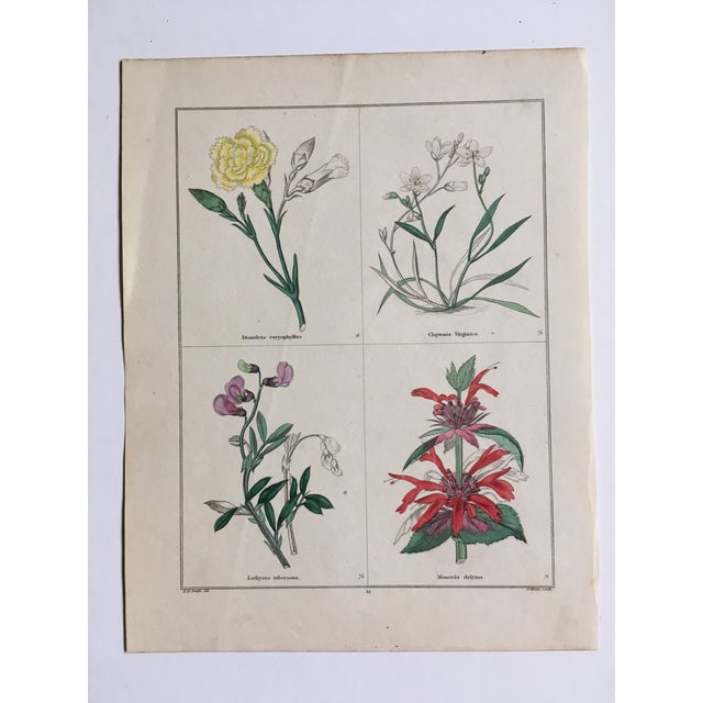 Blue Botanicals by Benjamin Maund C. 1854 For Sale - Image 8 of 8