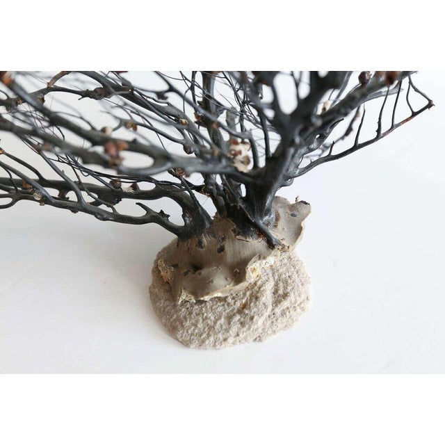 Black sea whip coral as sculpture mounted on stand. Note: International shipping is not available on this item.