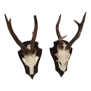 Skull Hunting Trophy Wall Mounts - a Pair For Sale