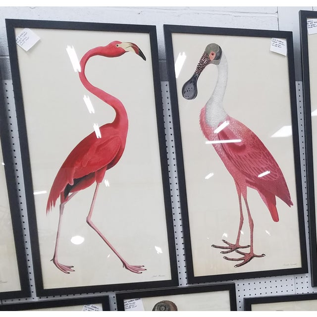 Illustration Pink Birds Prints- a Pair For Sale - Image 3 of 9