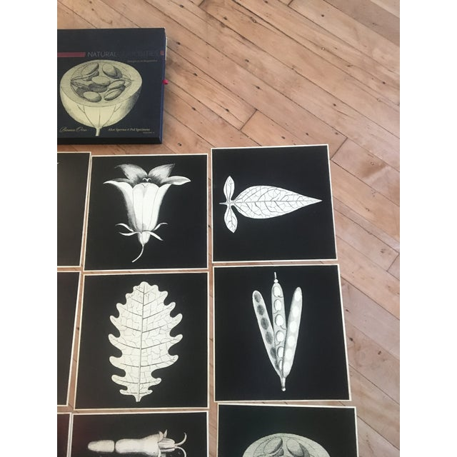 A collection of twelve stunning reproduction botanical prints. Would look amazing all framed and hung together as a single...