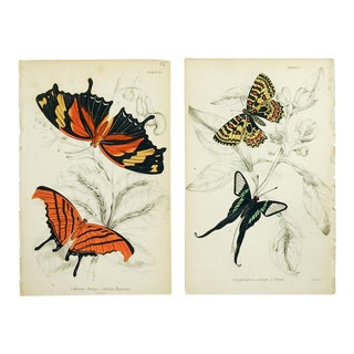 Butterfly Engraving Prints by William Lizars - a Pair For Sale