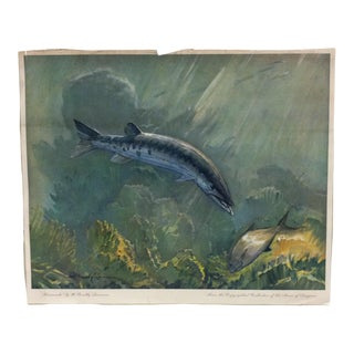 "1960s Vintage ""Barracuda"" W. Goadby Lawrence Color Animal Print For Sale"
