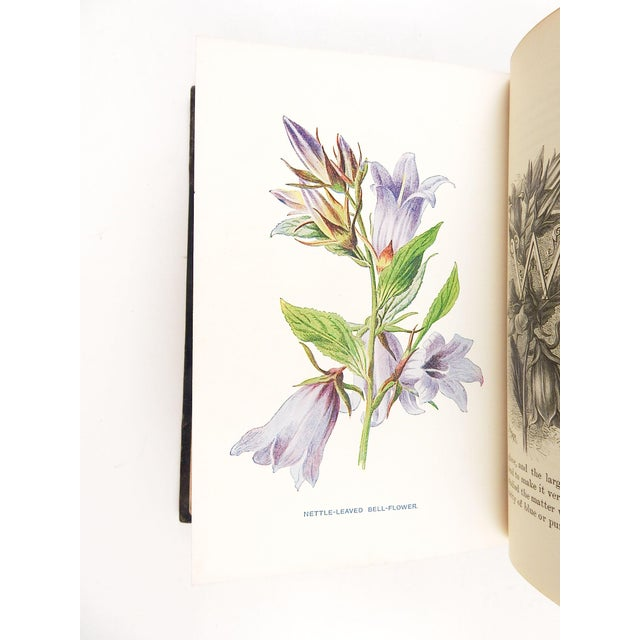 Black Familiar Wild Flowers 1902 - 2 Volumes For Sale - Image 8 of 11