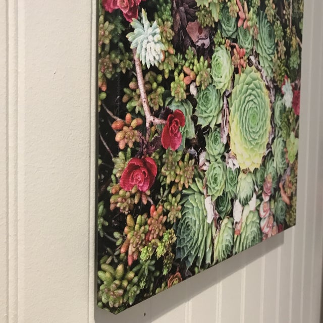 """Canvas """"Succulents"""" Photograph on Canvas For Sale - Image 7 of 10"""