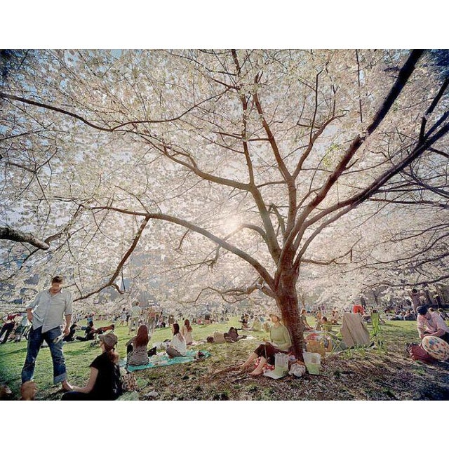 Untitled from Local Stories series - Central Park Blossoms, color photography print by Jerry Spagnoli - Image 1 of 3