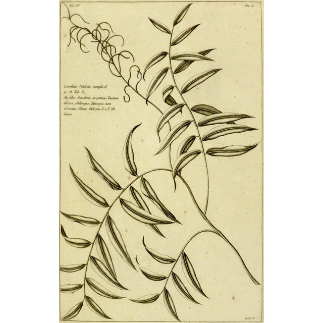 Antique Botanical Engraving, 1773 For Sale