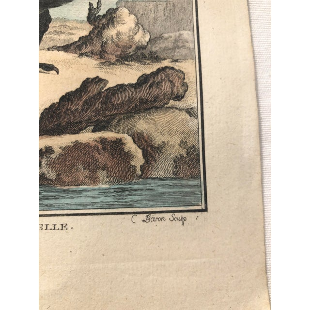 18th Century French Bird Engraving Signed by Jacques De Sève Featuring an Eurasian Coot For Sale - Image 4 of 13