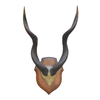 Large Set of Mounted African Antlers For Sale